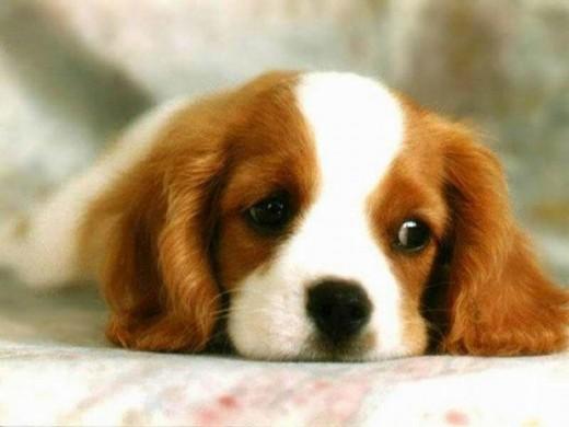 Cute%20dogs_0